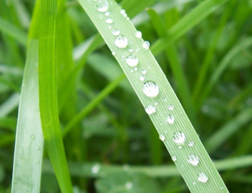 Rain Sensors for Irrigation Systems