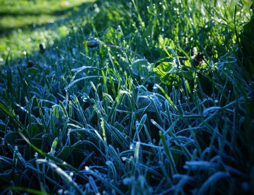 Time to Winterize your Lawn Sprinklers!