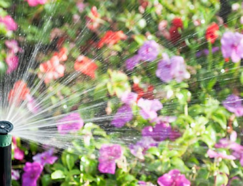 Sprinkler Alert! The Hot Weather Is Here!