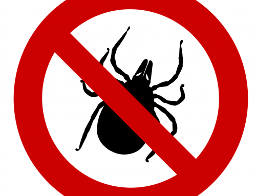 Long Island Natural Mosquito & Tick Control