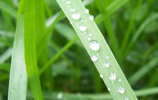 Smart Irrigation Month Archives Rain Rich Lawn